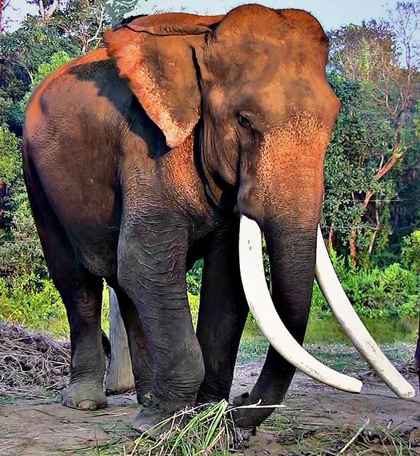 NEPAL, Royal Chitwan-Nationalpark, im Elefantencamp der Rangers, (serie),  15248/7953