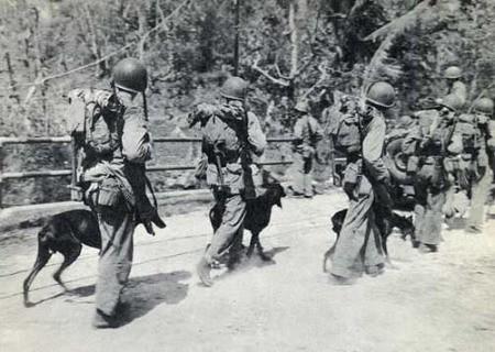 wdddguam72Doberman_Marine_War_Dog_Devil_Dogs_at_Guam_WWII_Photo