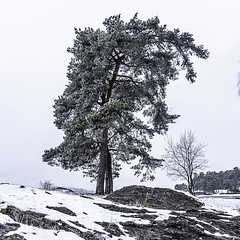 Misty day at Huk, Oslo