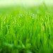 Small photo of Grass in A Minor