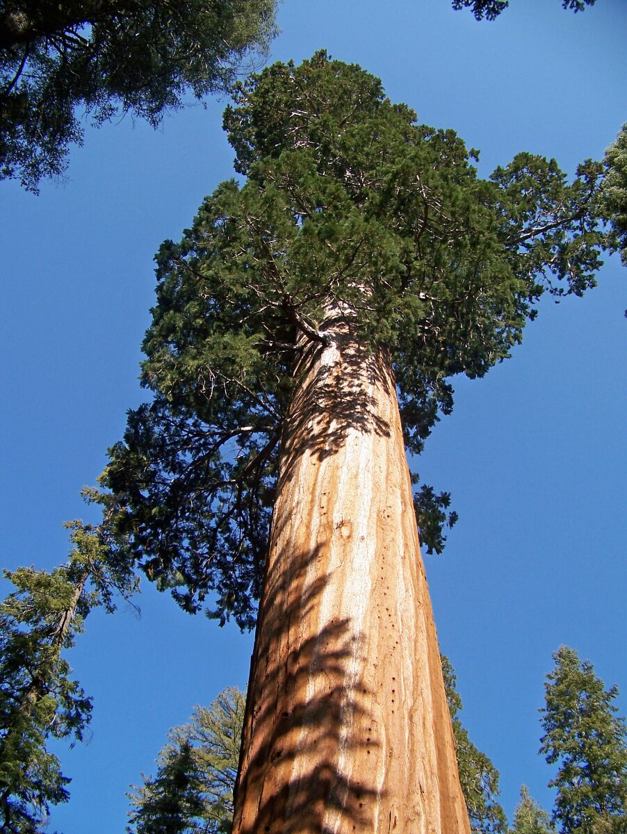 General Grant Tree in Kings Canyon National Park