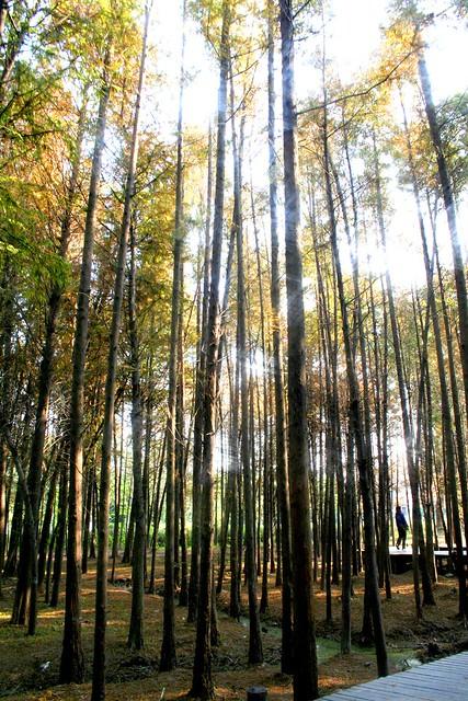 Bamboo Village Chinese Food Sherman Oaks