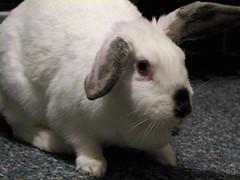 "Our Bunny ""Buddy"""