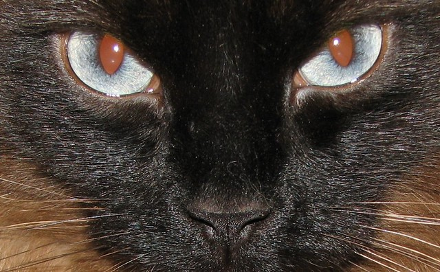Look into my riveting blue eyes...
