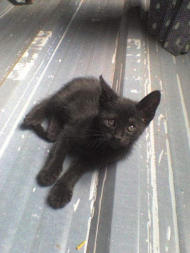 Hello kitty! My new pet ^^ (1)