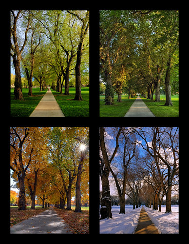 trees tree nature season landscape vanishingpoint colorado seasons mosaic year fourseasons co elm soe oval csu 2007 4seasons coloradostateuniversity clff mywinners abigfave anawesomeshot aplusphoto gruosss betterthangood