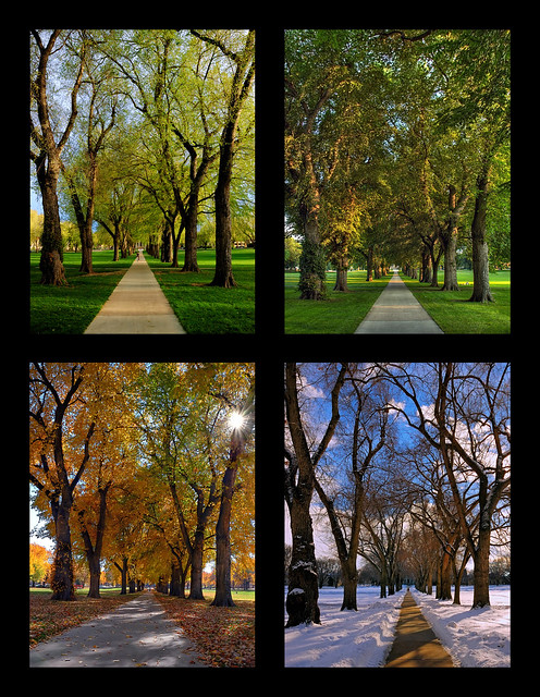 Through the Seasons at the Colorado State University Oval