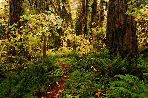 autumn trees water oregon fallcolors autumncolors trail pacificnorthwest oldgrowth lanecounty