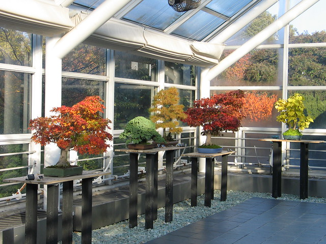The C.V. Starr Bonsai Museum in autumn.