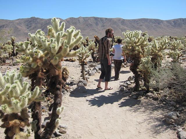 Cholla Cactus Garden Cholla Cactus Garden Joshua Tree Nat Flickr Photo Sharing