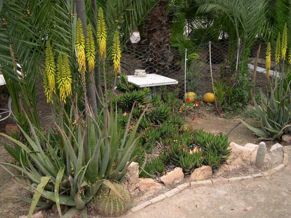 Fotos de jardines de cactus o de suculentas p gina 3 - Jardines con cactus y piedras ...