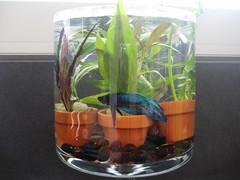 projekt waterworld oder wie ein fisch im glas peter pan s blick in die welt. Black Bedroom Furniture Sets. Home Design Ideas