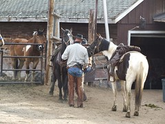 rodeo, western riding, mare, ranch, equestrian sport, pack animal, horse, stable,