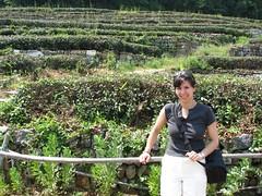 shrub, farm, garden, rural area, plantation,