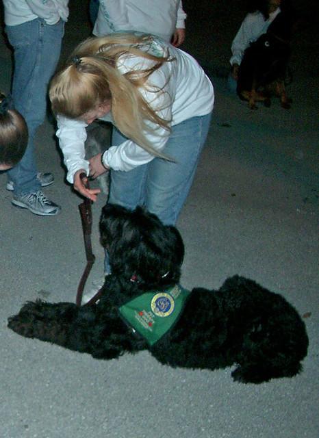 Broward Small Dog Rescue