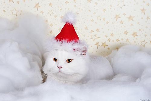 Santa Claws...