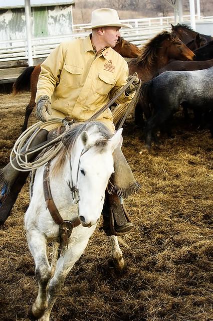 gathering mares 199