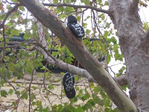 shoesontree tsb 2d4