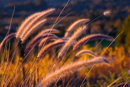 california landscape napa