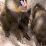 San Diego Zoo 008