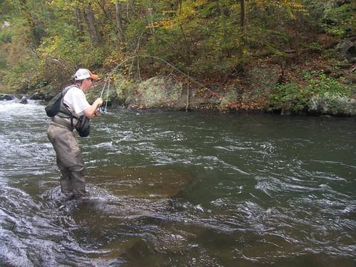 fly fishing for wild brown trout near philadephia pa on