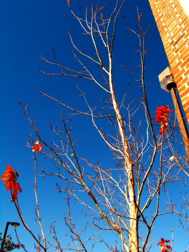 blue winter sky urban tree day olympus clear fernando effect orton sanchez e500 urbanfragments fernandosanchez