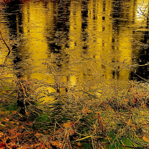 My Wild River Of Gold…!!!
