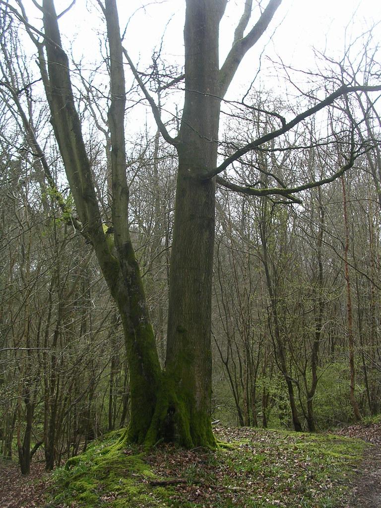 Tree Ockley to Warham