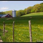 Cambridgeport+Farm+-+Vermont