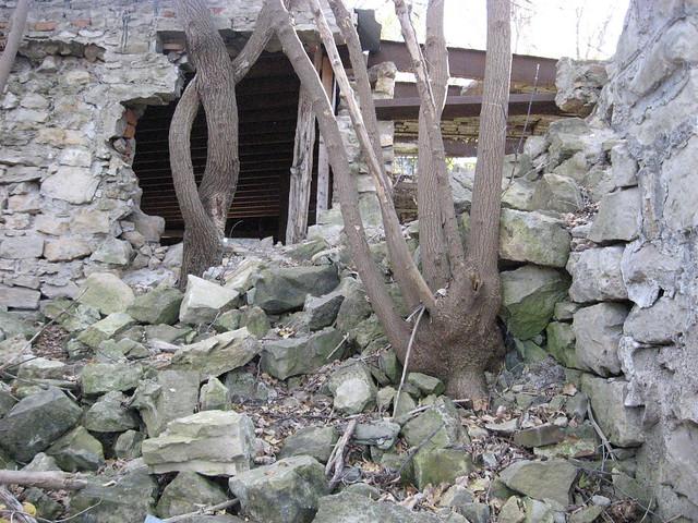 Hastings Ruins Tree Wall
