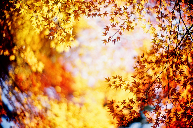 Golden days - Beautiful Bokeh Photography