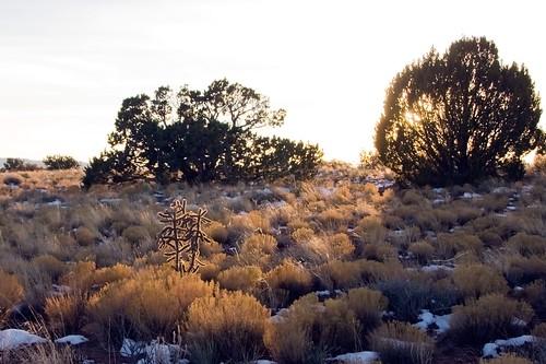 trees sunset cactus sky sun snow newmexico desert wilderness juniper cholla ojito junipers ojitowilderness