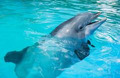 B is for Bottlenosed Dolphin