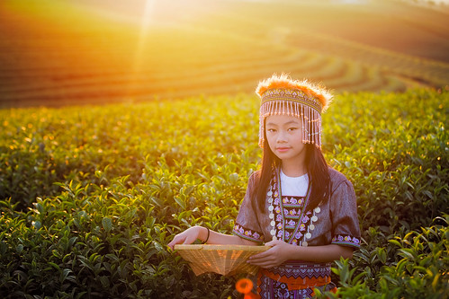 Kid and Green tea field in shui fong
