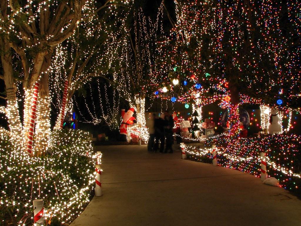 Multi Color Christmas Trees