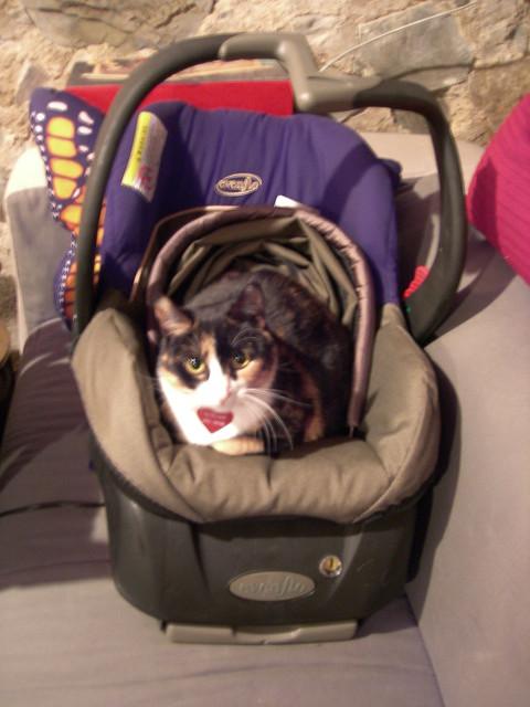cat car seat 02 flickr photo sharing. Black Bedroom Furniture Sets. Home Design Ideas