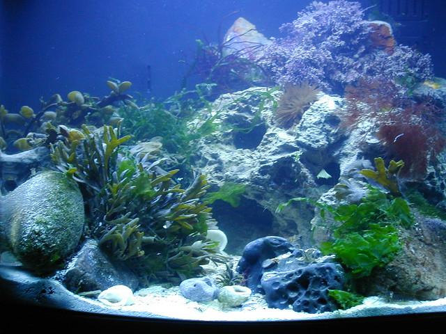 Marine nano aquarium two flickr photo sharing for Aquarium nano marin