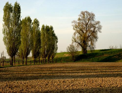 italy alberi italia ombre campagna giuliana emiliaromagna campi argini nikond80 fiumereno padulle