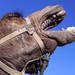 Camel in Pain. Rahat, Neguev, Israel by Gabriela Gleizer