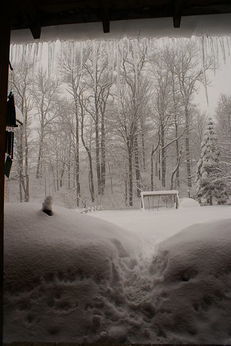 trees winter snow storm vermont path porch