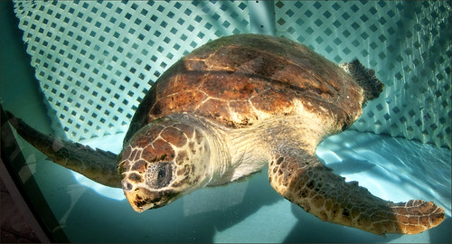 Loggerhead Marine Life Center by Alida's Photos