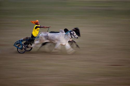 Bullock Cart Race at Kilaraipur