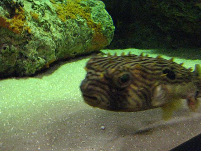 Nc aquarium manteo coupons