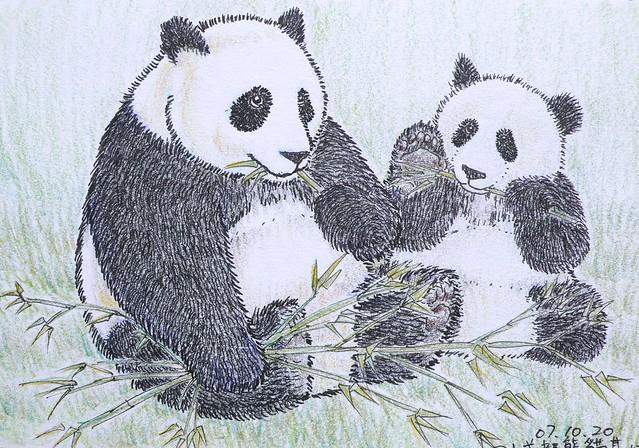 1822784460 ae84889a1b z jpgPanda Drawing In Pencil