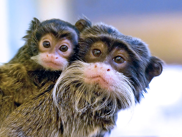 Beardy Monkey: A Gallery On Flickr