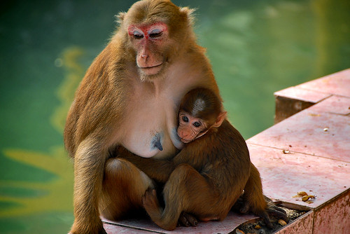 Thailand: at Monkey Cave Chiang Rai Province