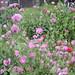 garden in may 019