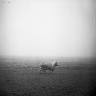 little horse in the mist