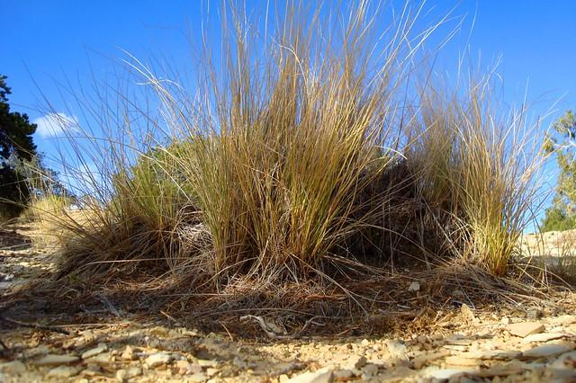 desert grass flickr photo sharing. Black Bedroom Furniture Sets. Home Design Ideas