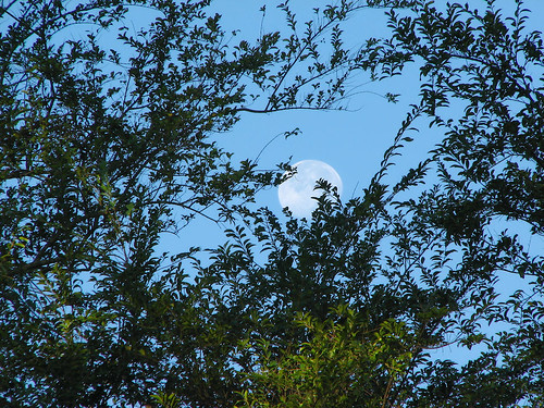 Daytime moon; image by Melissa P. on Flikr.